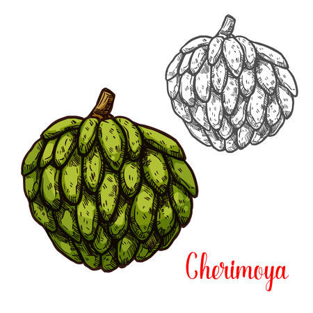 Cherimoya, custard apple sketch of tropical fruit 일러스트