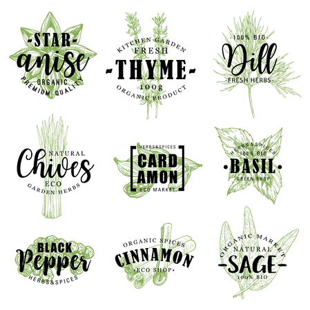 Spice or herb lettering with food condiment sketch Ilustracja