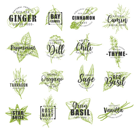 Spice and herb leaf sketch label with lettering