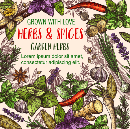 Herb and spice sketch poster of herbal food design Ilustracja