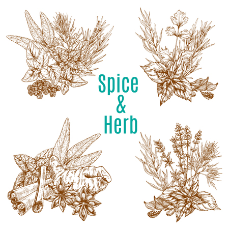 Vector poster of spices or herbs sketch seasonings Çizim
