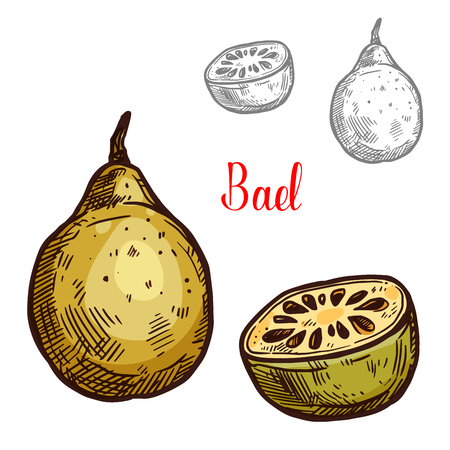 Bael vector sketch tropical fruit Illustration