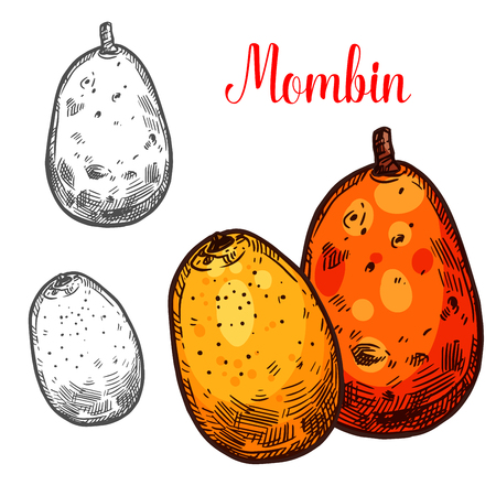 Mombin vector sketch tropical fruit