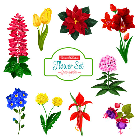Flower icon set of spring garden and house flowering plant. Tulip, dandelion and phlox, forget-me-not, poinsettia and delphinium, hippeastrum, fuchsia and amaryllis blossom bouquet with green leaf
