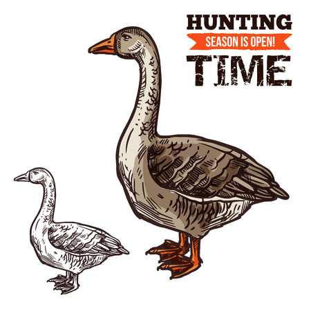 Goose wild bird sketch for hunting sport design