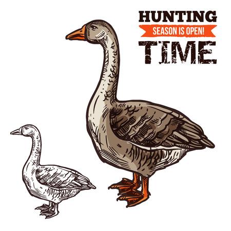 Goose wild bird sketch for hunting sport design Foto de archivo - 104209374