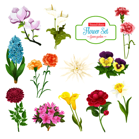 Blume des Frühlings blühende Pflanze und Baum-Cartoon-Icon-Set. Narzisse, Calla-Lilie und Stiefmütterchen, Pfingstrose, Hyazinthe und Phlox, Nelke, Magnolie und Asterblütenzweig mit üppigem Blütenblatt und Blütenknospe
