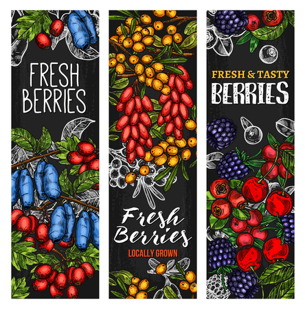 Wild berry or fresh fruit blackboard banner design Ilustracja