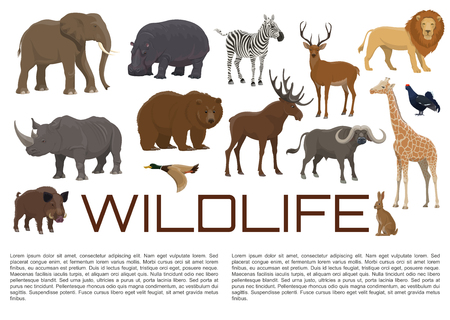 Wild animals and birds poster for wildlife zoo or hunt. Vector African giraffe, hippopotamus or rhinoceros and lion, elk or deer and buffalo, bear with duck and blackcock or rabbit and hog