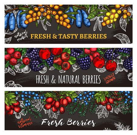 Vector sketch banners of farm and forest berries