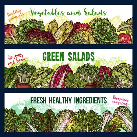Vector sketch banners of salads vegetables