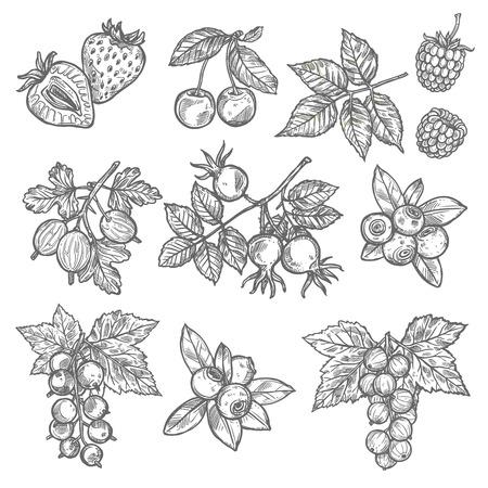 Garten- und Waldbeerenskizzen. Erdbeere, Kirsche und Blaubeere, Himbeere, Stachelbeere und Bruyere, rote und schwarze Johannisbeere mit Blattsymbol für Lebensmittel und natürliches Saftdesign
