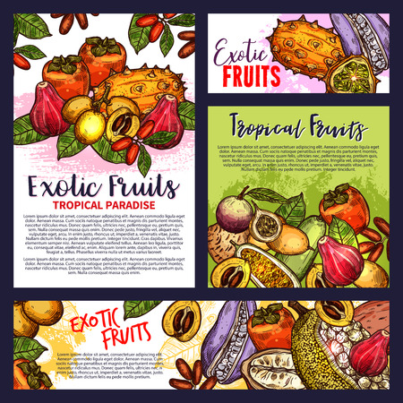 Exotic fruits poster tropical paradise sketches edible delicatessen fruits vector. Brochures design with mammee apple and maryla, kiwano and loquat, granadilla and kuruba, apple cashew and bam balan