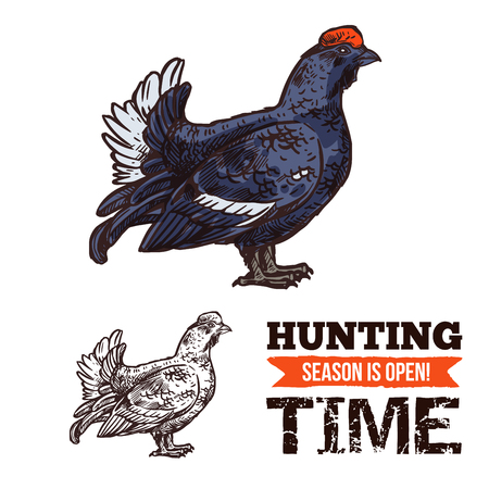 Hunting season open poster with capercaillie bird sketch. Time to hunt, turkey like grouse and hunting period start. Wild animal shooting sport promo with dark feathered fat bird capercailzie vector 스톡 콘텐츠 - 104909729