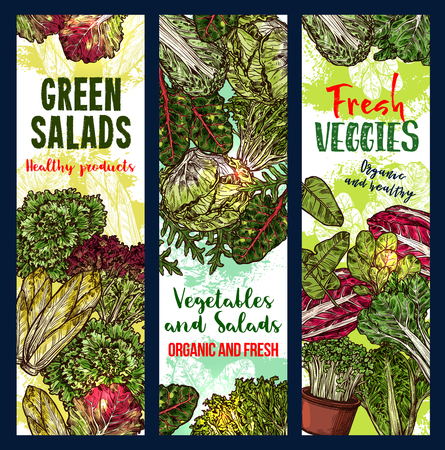Vegetarian salads or lettuce vegetables sketch banners. Vector design of vegan chicory and oakleaf lettuce or spinach, watercress veggie or pak choi cabbage and sorrel for farm market or grocery store