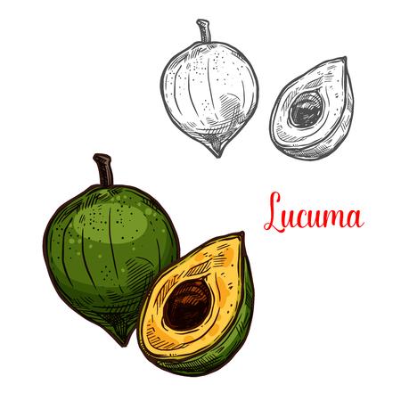 Lucuma green tropical fruit sketch. Vector botanical design of pouteria lucuma fruit for farm fruit market, juice or jam package. Isolated on white Reklamní fotografie - 114865607