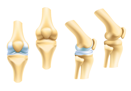 Human joints vector icons for orthopedics and surgery medical design. Vector isolated icons of leg knee or arm and hand joints with cartilage synovial fluid for orthopedics treatment medicine pills Stockfoto - 114865617