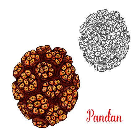 Pandan yellow tropical fruit sketch. Vector botanical design of pandan or pandanus screw palm species for farm fruit market, juice or jam package