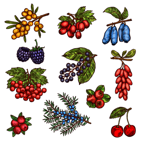 Farm garden and wild forest berry fruits
