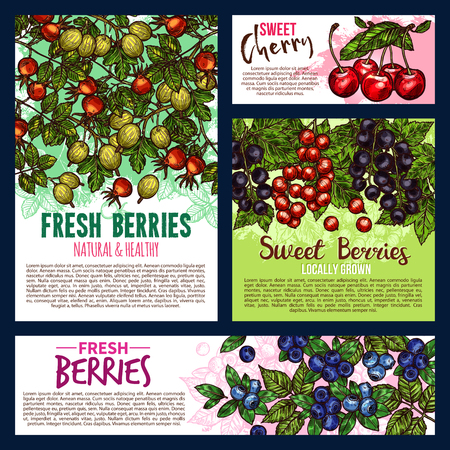 Garden and wild berry fruits posters Illustration