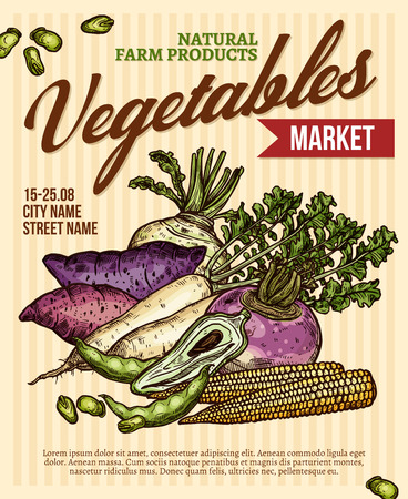 Vegetable market promo poster with veggies product. Baby corn, broad bean and turnip, radish, sweet potato, rutabaga and caigua root vegetable sketch banner for farm market flyer design
