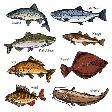 Icone di schizzo isolate animali di pesce e frutti di mare freschi. Salmone, pesce persico e trota, carpa, passera e siluro, aringa e navaga simboli per lo sport della pesca, menu del ristorante e design del mercato del pesce