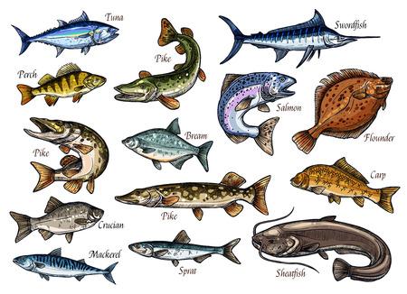 Fischskizzen von Meer-, Ozean- und Flusstieren für das Design von Meeresfrüchten und Angelsportarten. Lachs, Thunfisch und Barsch, Karpfen, Makrele und Flunder, Hecht, Brasse und Sheatfish, Sprotte, Schwertfisch und Karausche-Ikonen