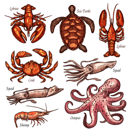 Seafood, shellfish and marine animals sketches for fishing sport and restaurant menu design. Crab, lobster and squid, octopus, shrimp and sea turtle isolated icons Ilustração