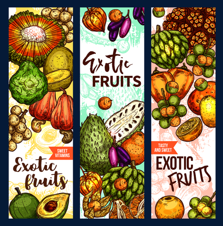 Exotic fruits and tropical fruit harvest sketch banners. Vector design of pandan, bergamot or lucuma and tangerine fruit, organic naranjilla, longkong or soursop and mombin with jambolan and physalis Ilustração