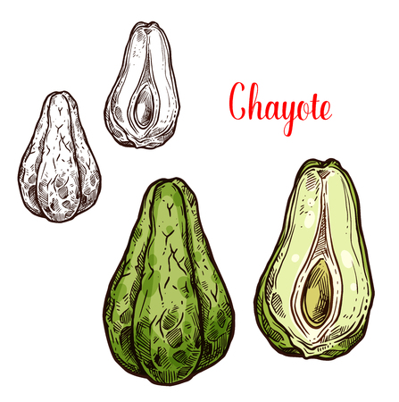 Chayote vegetable sketch of exotic edible plant. Tropical american or mexican squash isolated icon of green pear shaped veggies for vegetarian salad recipe menu or farm market label design Illustration