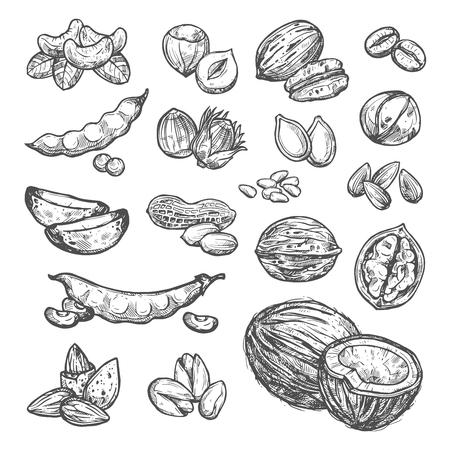 Conjunto de bocetos de nueces, semillas y frijoles de diseño de súper alimentos saludables. Maní, nuez y avellana, pistacho, almendra y anacardo, nuez, macadamia, café y soja, coco, girasol y semilla de calabaza