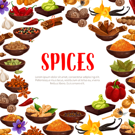 Spices poster of herbal seasonings. Vector design of chili pepper, vanilla or cinnamon and cardamom, cloves seeds or curry, ginger and anise or turmeric curcuma and saffron or vanilla and nutmeg Illustration