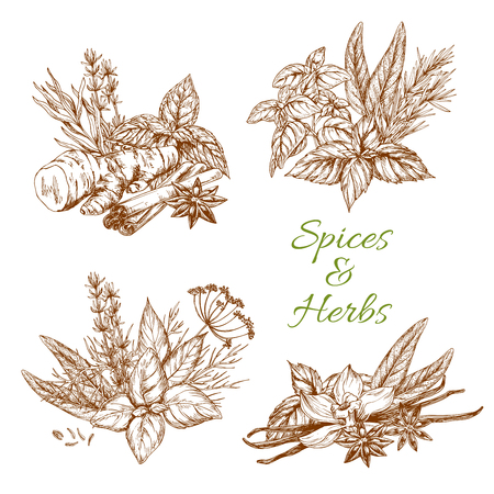 Herbs and spices seasonings and condiments of lemongrass, thyme and tarragon or parsley and rosemary. Vector design of organic and farm grown peppermint, cilantro or cinnamon and ginger