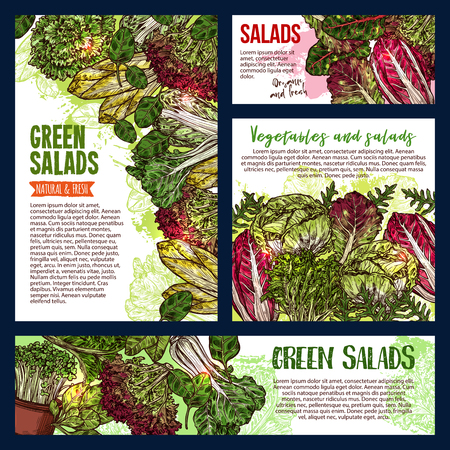 Salad leaf and vegetable greens banners of healthy vegetarian food. Fresh spinach, lettuce salad and cabbage, bok choy, arugula and chard, sorrel, watercress, chicory and batavia sketch poster design Ilustracja