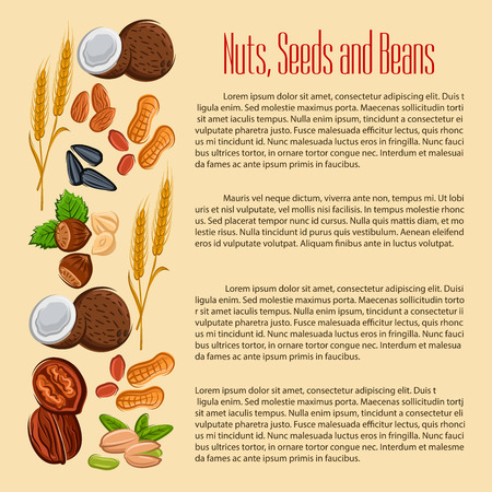 Nuts, grain, plant seeds and beans. Vector coconut, almond and pistachio kernels, wheat, oat or rye ears cereals, peanut and cashew, hazelnut, walnut, sunflower seed, legume and coffee bean or pea pod. Vegan or vegetarian nutrition food banner Illustration