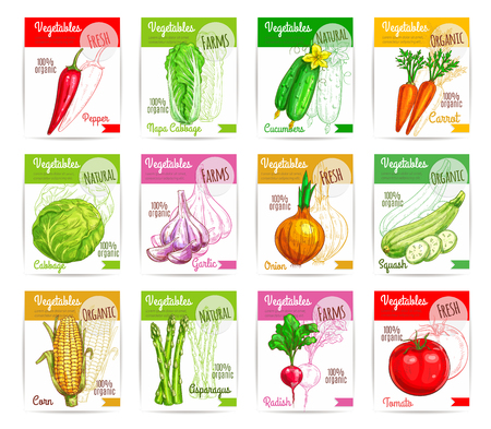 Vegetables and farm greens price labels or tags. Natural spicy chili pepper, chinese cabbage napa and cucumber. Vector carrot, garlic and onion. Vegetarian organic squash zucchini, corn and asparagus, radish and tomato