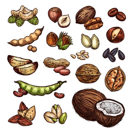 Les noix et les haricots dessinent la noix de coco de la ferme biologique, les arachides, les pistaches et les noix. Vector isolé noix récolte de graines de tournesol, de noix de cajou ou d'amandes et de noix de cajou