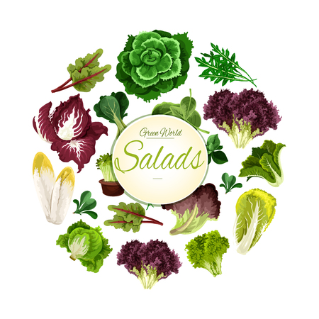 Leafy salads of lettuce vegetables lollo rossa and radicchio, chicory salad and spinach, arugula, mangold kale and collard, romaine, pak choi and sorrel, swiss chard salad with batavia and gotukola. Vegetarian and vegan natural food vector poster