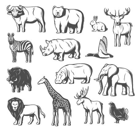Tier- und Vogelikonen für Zoo- oder Jagddesign. Vektor isoliert wilder Bär, Büffelochse oder Elch und Hirsch, Aperschwein, Fasan oder Schwarzhahnvogel und afrikanischer Elefant, Giraffe oder Zebra und Löwe