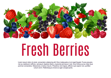Berries poster or banner template. Fresh vector  blueberry, black currant and redcurrant, cherry and raspberry harvest. Forest strawberry, gooseberry and briar berry fruits crop