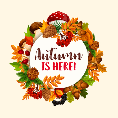 Autumn frame of fallen leaf, fruit and mushroom. Fall nature season poster with maple leaf, oak tree branch with acorn, briar and rowanberry fruit, forest cep and fly agaric, pine cone, chanterelle
