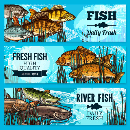 Fresh fish sketch banners for sea food restaurant or market store. Vector set of fisherman catch carp and pike, fresh sheatfish or catfish, river crucian and flounder and salmon or trout Illustration