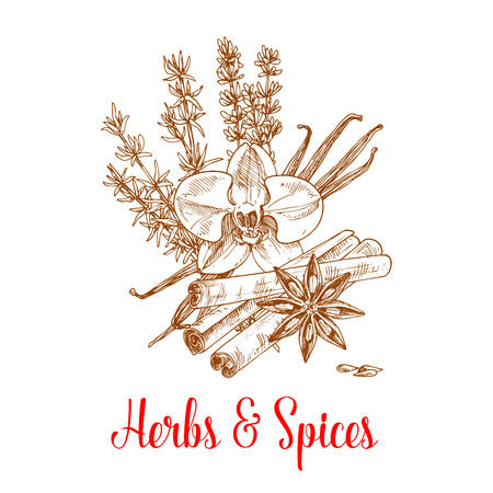 Herbs and spices sketch of vanilla pod and cinnamon sticks, thyme, anise and tarragon. Herbal spicy culinary condiments or aromatic flavoring for grocery store, farmer market or product pack design. Ingredients for sweets and desserts