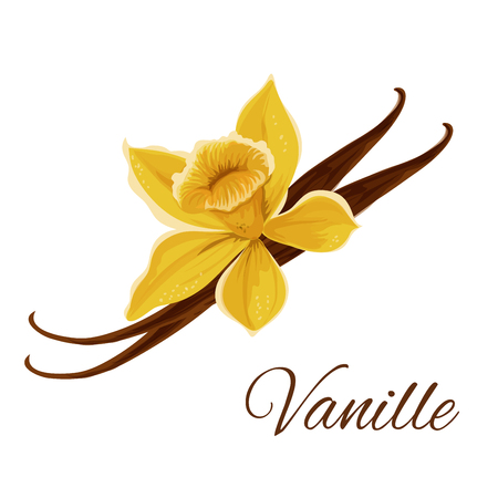 Vanille. Vector icon of vanilla pod with flower. Icon of flavor spice herb. Emblem of aromatic fruit plant for culinary condiment, cooking ingredient, package sticker, label design element Stockfoto - 106181381