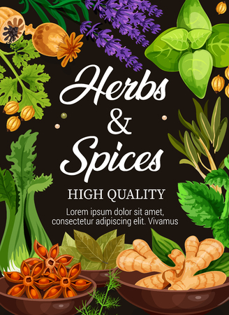 Spices and herbs poster of organic premium seasonings. Vector design of natural farm poppy seeds, celery or basil and lavender, ginger and anise or parsley and nutmeg with sage and bay leaf Zdjęcie Seryjne - 112226955