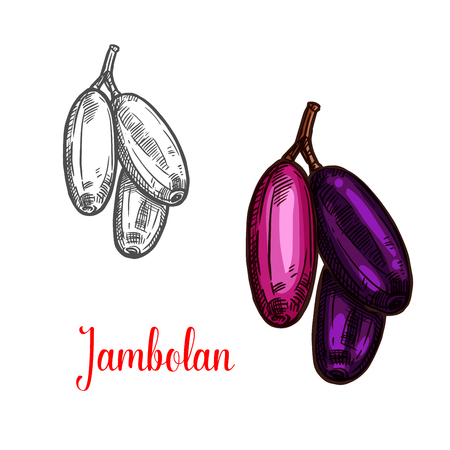 Jambolan indian tropical fruit sketch. Bunch of exotic java plum or jambul with ripe purple berry for natural juice, vegetarian snack food and sweet jam dessert label design Иллюстрация