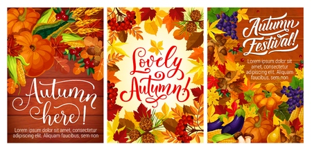 Autumn harvest festival posters with vegetables and fruits, berries and nuts. Grapes and cranberry, acorn and pear, mushroom and corn, pumpkin or squash and currant, wheat spikes and viburnum vector