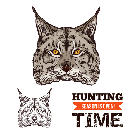 Lynx animal sketch for hunting sport open season. Wild cat or bobcat predator head isolated icon, wildcat with gray fur and black tufts on ears for zoo mascot, hunter club or hunting camp design