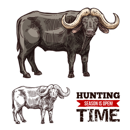 African buffalo animal isolated sketch of hunting sport open season. Black bull of cape buffalo or desert ox with large horns for safari tour or hunter club symbol design 写真素材 - 106482376