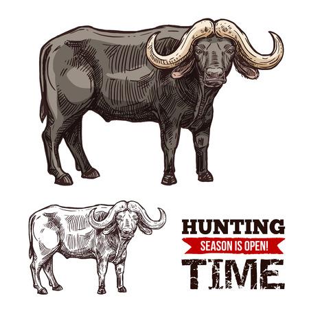 Afrykański bawół zwierzę na białym tle szkic polowania sport otwarty sezon. Czarny byk z bawoła lub wołu pustynnego z dużymi rogami na safari lub projekt symbolu klubu myśliwego